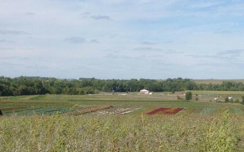 HAFA field