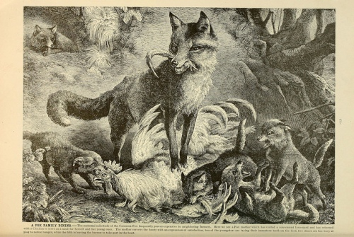 Brehm's Life of animals : Volume 1, Mammalia Chicago :Marquis,1895. http://biodiversitylibrary.org/item/37942