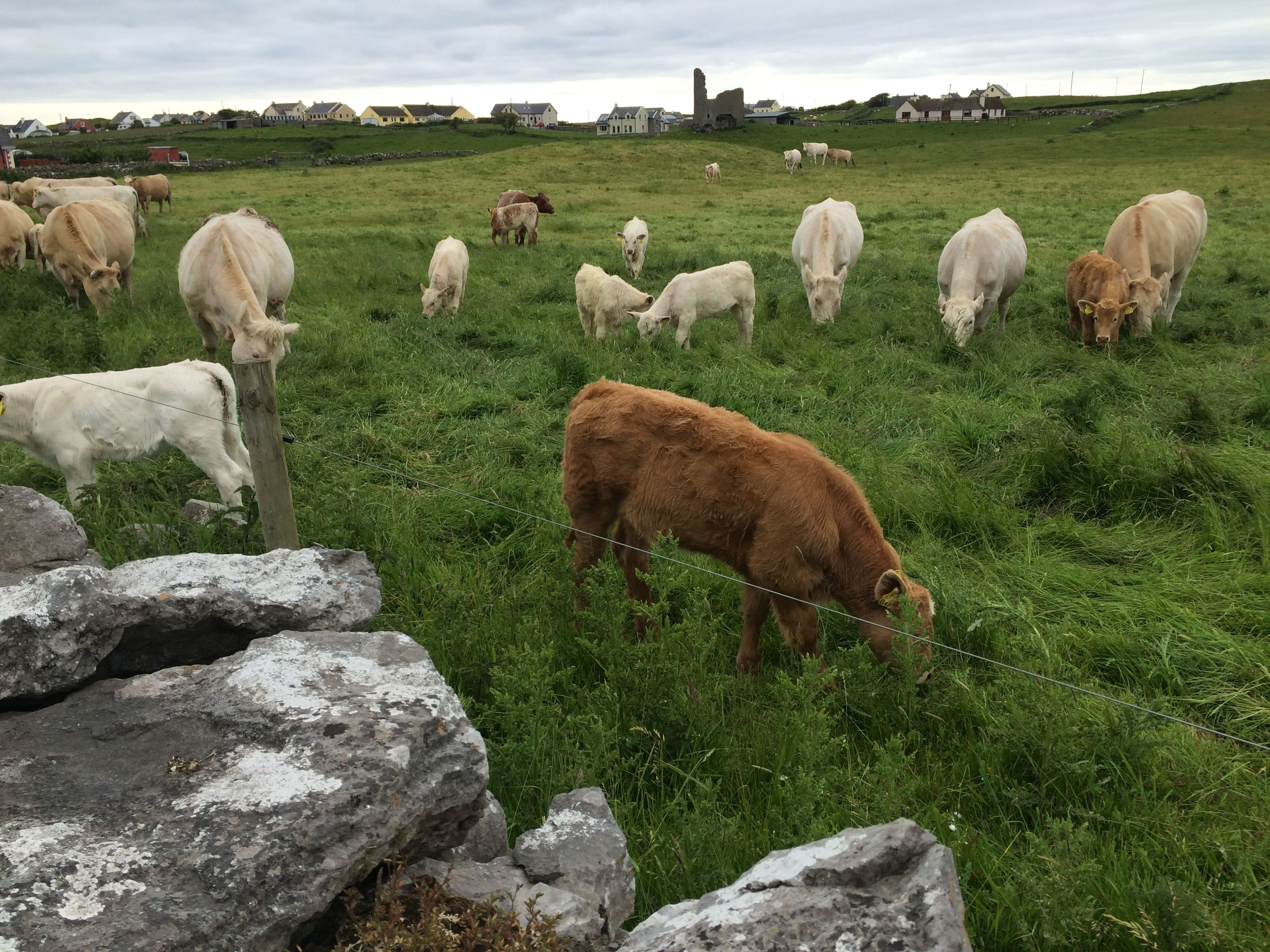 Learning from Irish farms